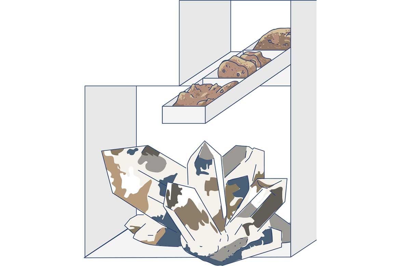 naturhistorische sammlungen millionen objekte warten auf die digitalisierung horizonte. Black Bedroom Furniture Sets. Home Design Ideas